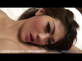 Ladyboy shemale gay and sex