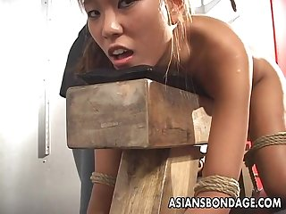 Tied to a stock asian bimbo gets dildo stick poked