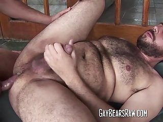 Hairy gay Bear ass banged